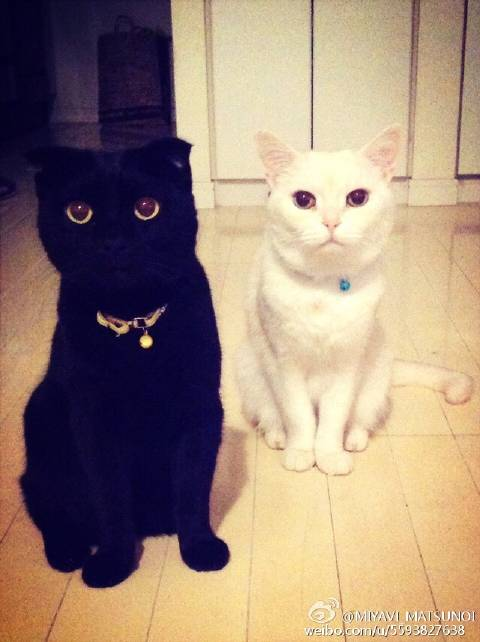 May 2015 It 's Miro and Chrono [喵喵] [喵喵] my cute sons! !.jpg